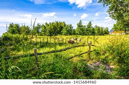 Summer nature farm fence landscape. Farmland summer scene. Summer village house farmland scene. Summer farm house scene #1415684960