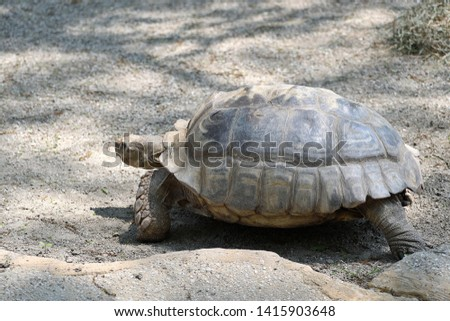 a close up, details of turtle, turtles #1415903648