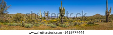 The landscape of the Sonoran Desert in full sunlight.  This image has an exceptional amount of lush green vegetation and clear blue skies as well as several saguaro cacti and palo verde trees.