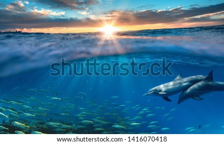 Beautiful tropical sea underwater background with traveling dolphins in blue water  #1416070418