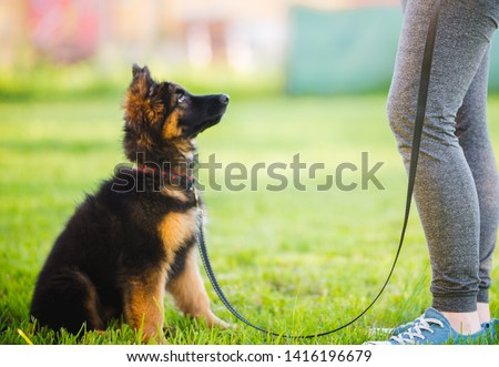 German shepherd puppy sitting and training with the owner Royalty-Free Stock Photo #1416196679