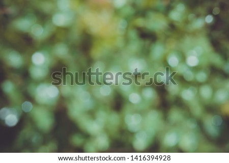 Green blurred background of grass, dew and shiny bokeh. Rainy autumn day. Bright natural pattern.