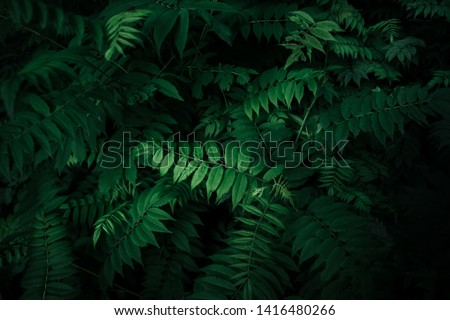 Fresh natural leaves pattern. Beautiful tropical background made with young green fern leaves. Dark and moody feel. Selective focus. Negative space. Concept for design. Flat lay, low-key lighting. #1416480266