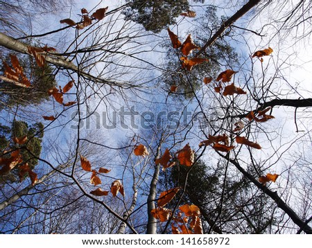 Autumn forest #141658972