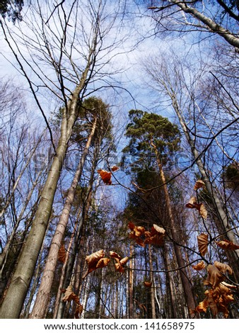 Amazing autumn forest #141658975