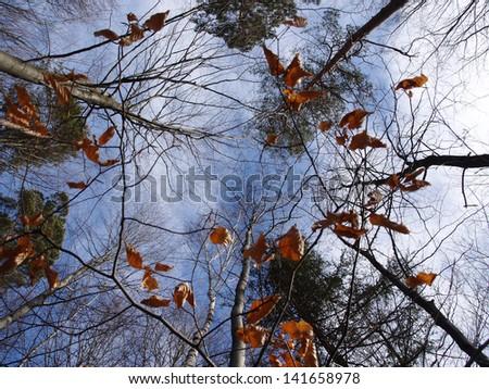 Autumn forest #141658978