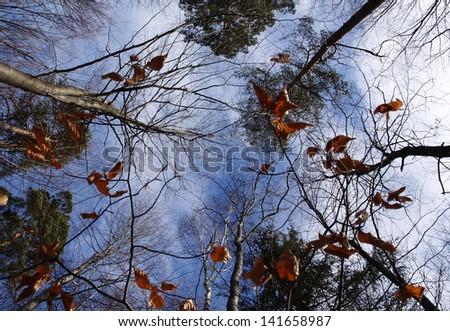 Autumn forest #141658987