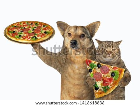 The dog and cat eat pizza together. White background. Isolated.
