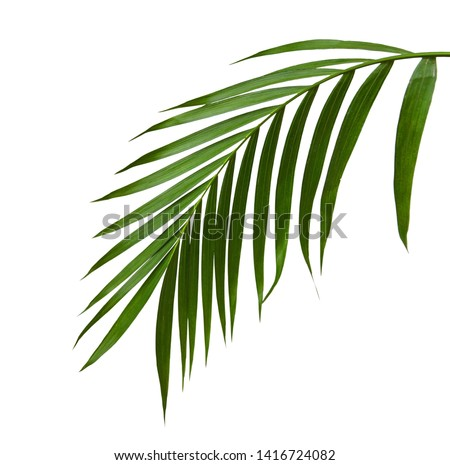 Green leaves of palm tree isolated on white background #1416724082