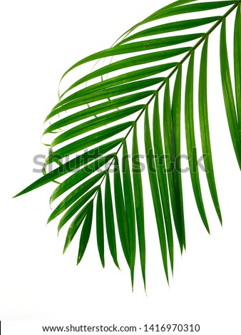 Green leaves palm isolated on white background with clipping path for design elements #1416970310