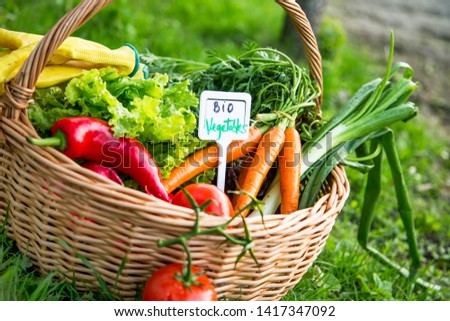 Bio vegetables basket. Fresh organic vegetables in a basket with gardening gloves outdoor in the garden, freshly harvesting organic vegetables in the basket, healthy organic gardening  #1417347092