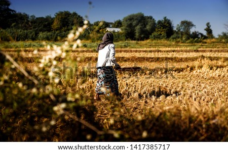 Myanmar - Thayet - Ricefarmer #1417385717