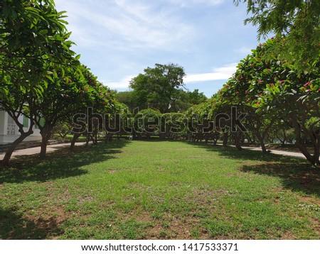 green garden with blue sky #1417533371