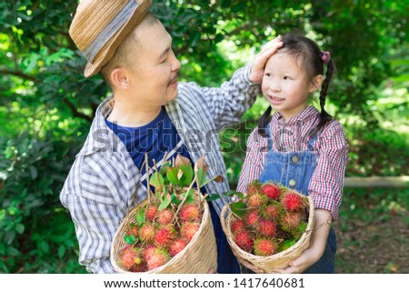 asian gardener family harvest organic rambutan fruit in farm, they feeling happy in family time, child learning and development, asian father use hand touch on head of asian children #1417640681