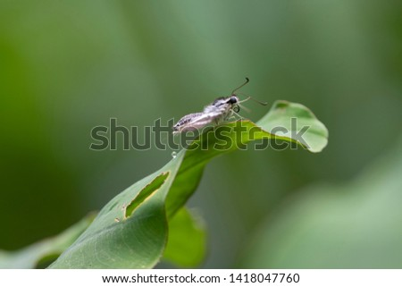 Small butterfly on green leaves #1418047760