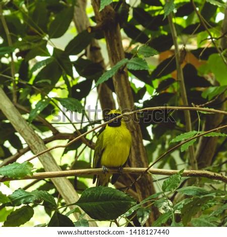 amazing urban yellow bird on branch #1418127440