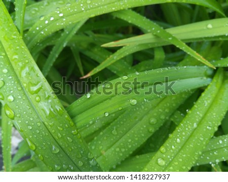Drops of water on green leaves #1418227937