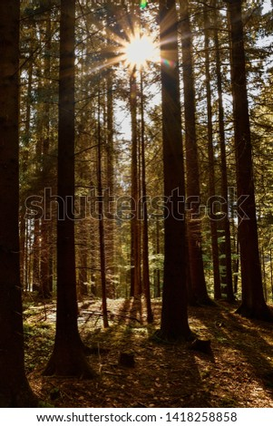 bavarian forest in the morning sunlight - healthy place  #1418258858
