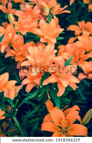orange flowers with green leaves #1418346329