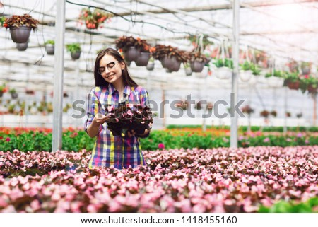 Beautiful smiling girl in glasses, worker with flowers in greenhouse. Girl holds flowers of begonias #1418455160