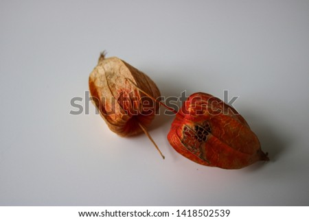 Closeup on dry physalis berries #1418502539