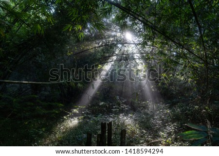sunlight sunlight penetrates trees in the forest #1418594294