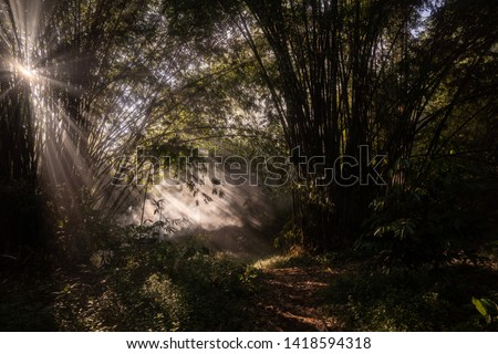 sunlight sunlight penetrates trees in the forest #1418594318