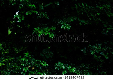 Dark Green leaves background with blank space frame  #1418609432