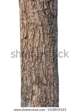 Trunk of a tree Isolated On White Background Royalty-Free Stock Photo #1418839163