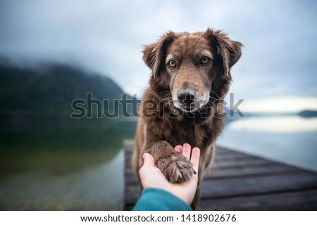 Dog gives human paw. Friendship between man and dog. Royalty-Free Stock Photo #1418902676