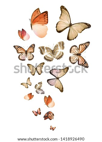 Flock of flying butterflies isolated on white #1418926490