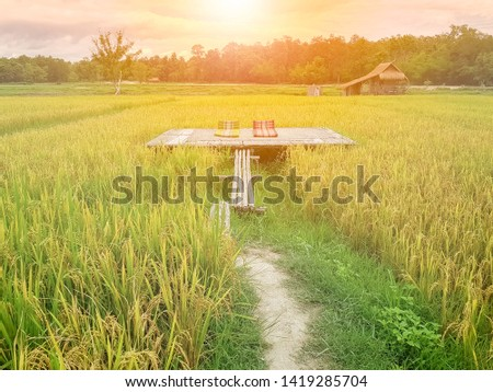 Bamboo Veranda with two Thai Triangle Cushion Pillows in golden ear jasmine rice field view in Thailand countryside paddy field in sunset sunray. Thailand Agro-tourism in organic farm from nature. #1419285704