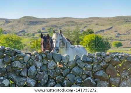 Horses and stone wall in Ireland #141935272