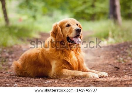 Portrait of a  dog #141945937