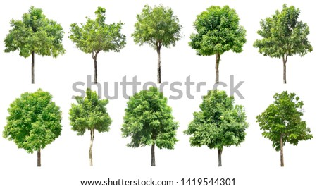 Trees green leaves.  Isolated on white background. (clipping path) Total 10  #1419544301