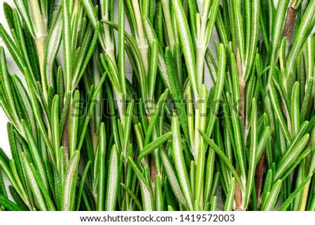 Fresh green sprig of rosemary. Rosemary texture. Rosemary macro. Rosemary branch #1419572003