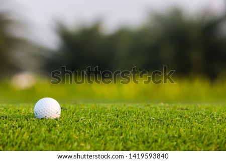 Green grass with golf ball close-up in soft focus at sunlight. Sport playground for golf club concept