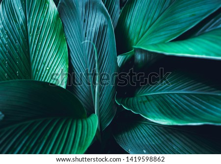 Dark Leaves background Blue green Leaf surface #1419598862