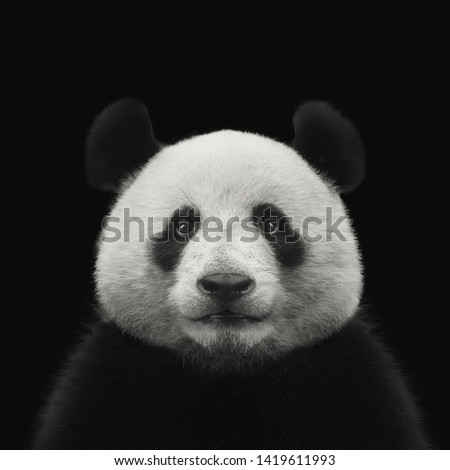 Panda bear face isolated on black background