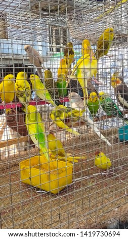 Different types of birds eat food #1419730694