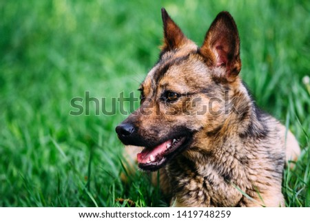Domestic cute dog on grass #1419748259
