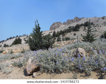 Faraway view of Vulcan's Eye from Mt. Lassen Peak trail. Lupine and pine trees can be seen in the view.          #1419788273