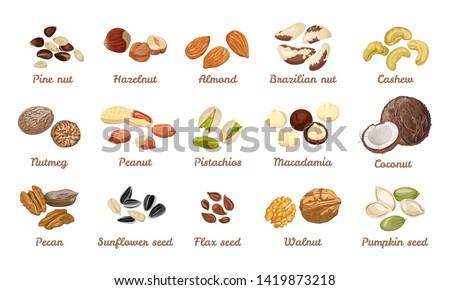 Nuts and seeds set. Cashew, hazelnut, almond, brazil nut, walnut, peanut, pistachios, macadamia, pecan, nutmeg, cedar, coconut. Pumpkin, sunflower, flax seeds.Vector illustration in cartoon flat style #1419873218