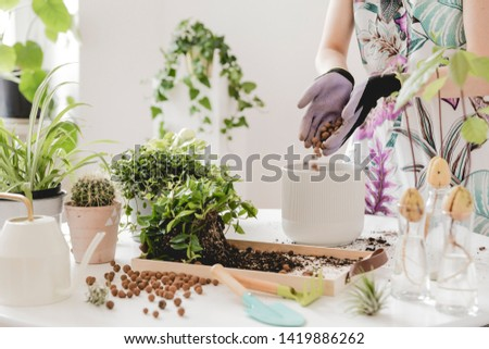 Woman gardeners transplanting plant in ceramic pots on the white wooden table. Concept of home garden. Spring time. Stylish interior with a lot of plants. Taking care of home plants. Template. #1419886262