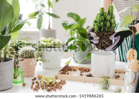 Woman gardeners transplanting plant in ceramic pots on the white wooden table. Concept of home garden. Spring time. Stylish interior with a lot of plants. Taking care of home plants. Template. #1419886265