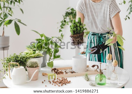 Woman gardeners transplanting plant in ceramic pots on the white wooden table. Concept of home garden. Spring time. Stylish interior with a lot of plants. Taking care of home plants. Template. #1419886271