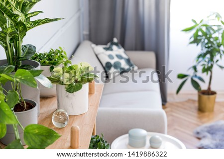 Stylish and boho home interior of living room with wooden shelf, design gray sofa, a lot of plants and elegant accessories. Botany and minimalistic gray home decor with plants. Cozy home decor. Royalty-Free Stock Photo #1419886322
