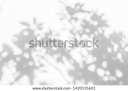Tree shadow with leaves, branch and light shadow bokeh  on white wall blurred background, nature shadow art on wall