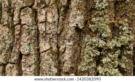 Tree trunk with rough bark, beautiful texture. #1420382090