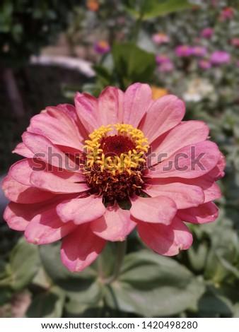beautiful flower photos shot up close
